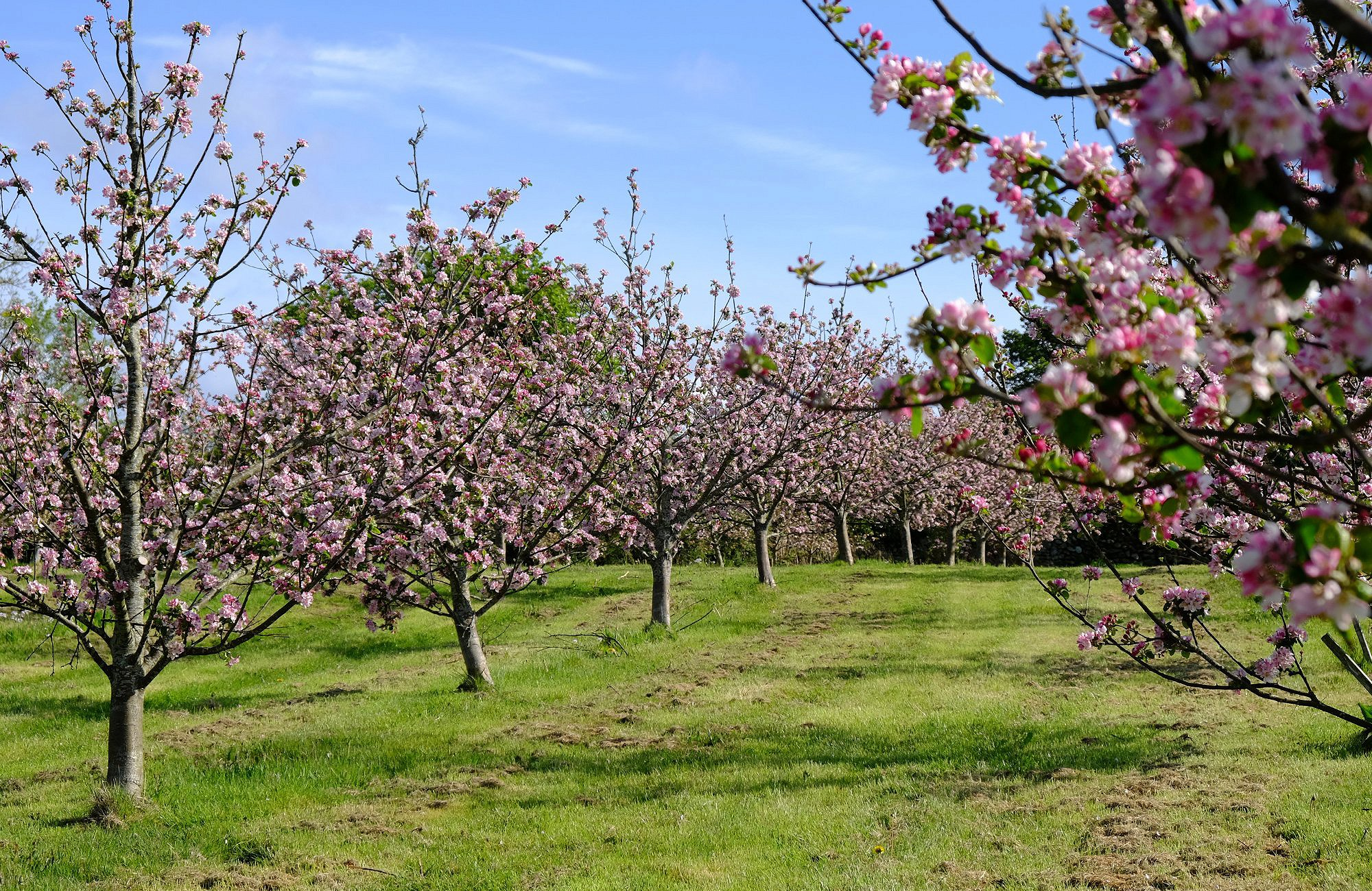 Our Orchard here at Pant Du